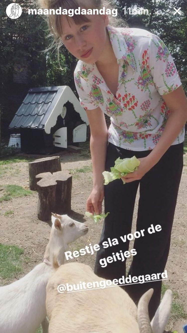 elvis rot knuffelen en kroelen met geitjes bij buitengoed de gaard