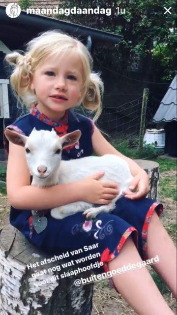 maandag maandag knuffelen met geitjes bij buitengoed der gaard pipowagendeluxe Petra slaapwagen
